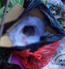 Penemuan Bayi di Gowa